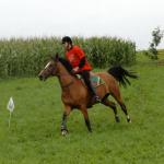 DSS 2010